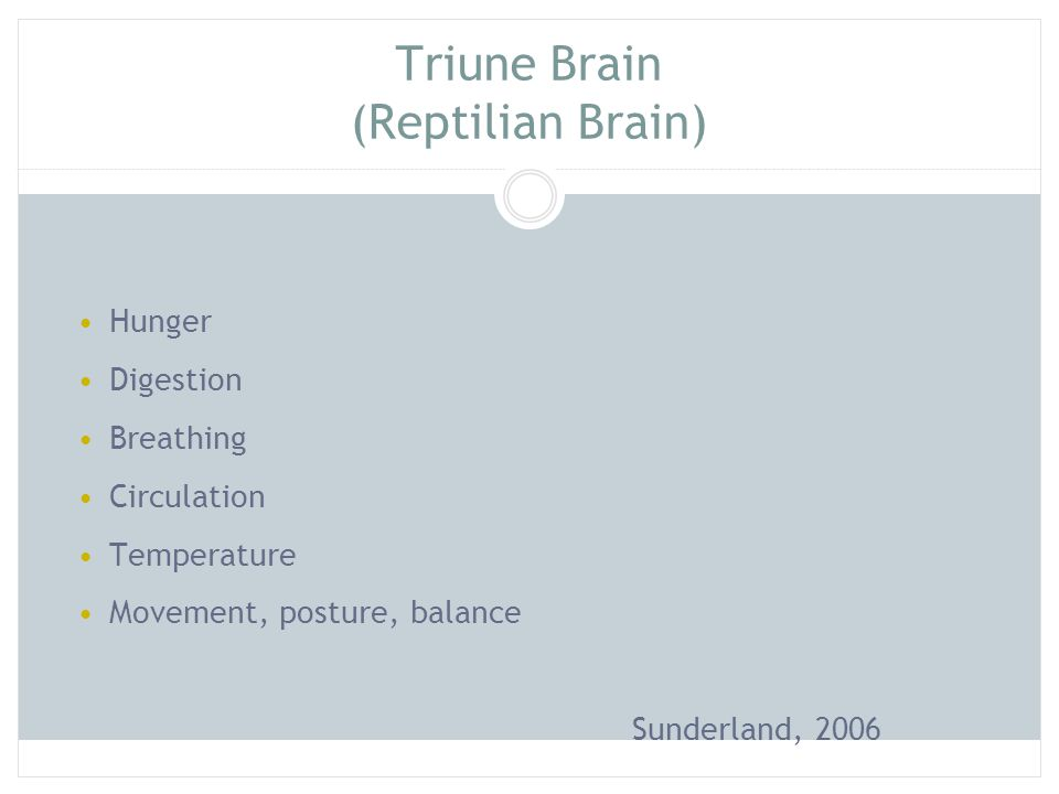 Triune Brain (Reptilian Brain) Hunger Digestion Breathing Circulation Temperature Movement, posture, balance Sunderland, 2006