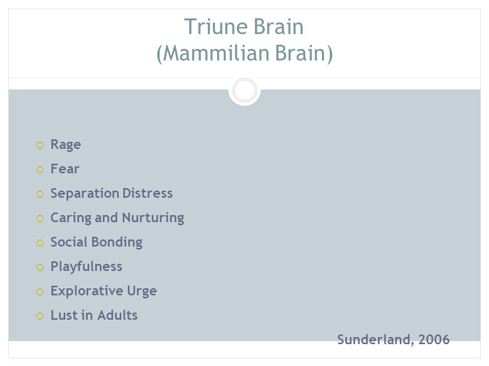 Triune Brain (Rational Brain)  Creativity and Imagination  Problem- solving  Reasoning and reflection  Self- awareness  Kindness, empathy and concern