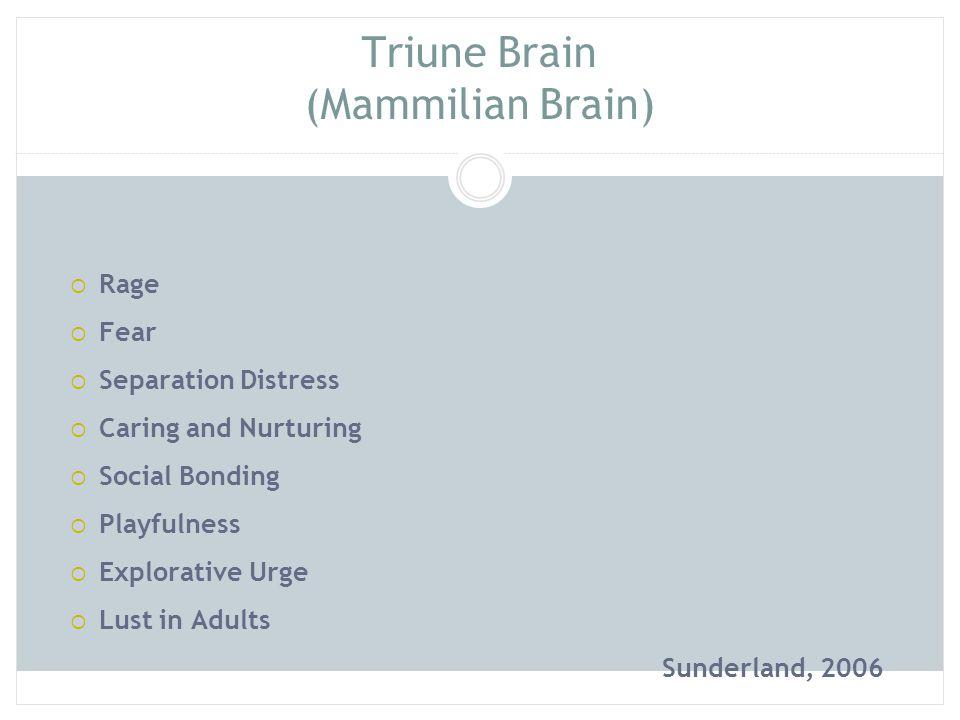 Triune Brain (Mammilian Brain)  Rage  Fear  Separation Distress  Caring and Nurturing  Social Bonding  Playfulness  Explorative Urge  Lust in