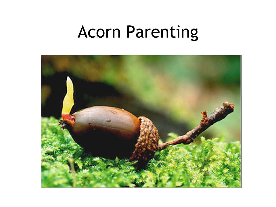 Acorn Parenting