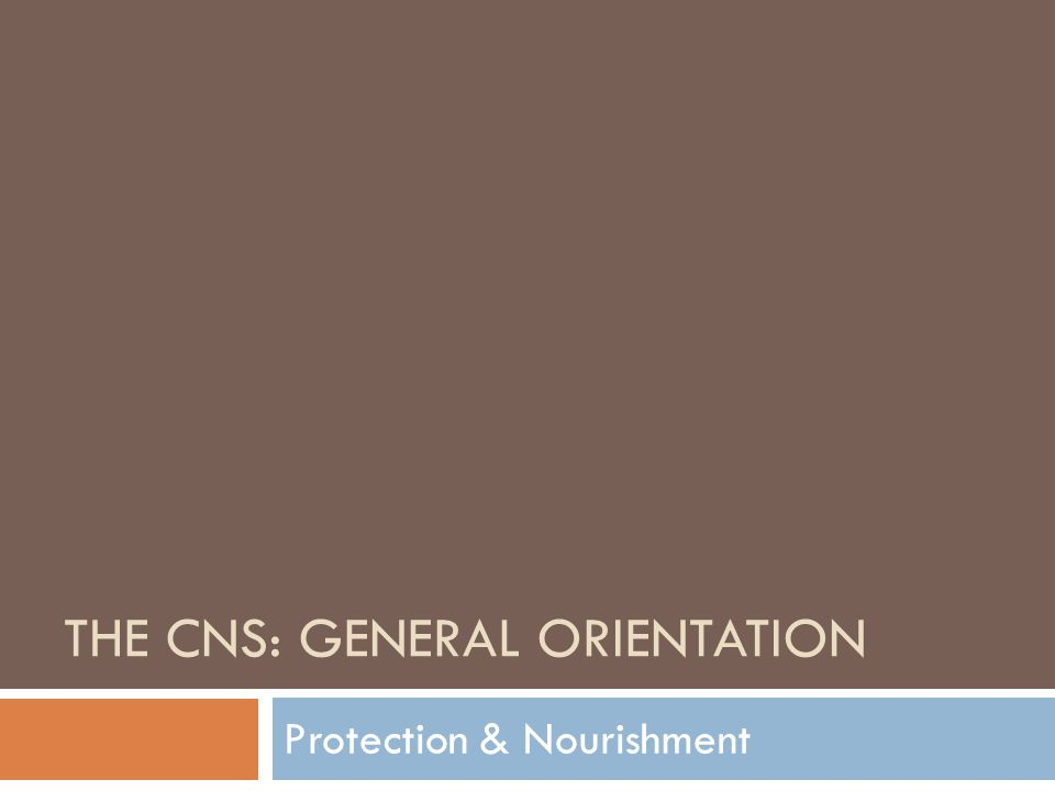THE CNS: GENERAL ORIENTATION Protection & Nourishment