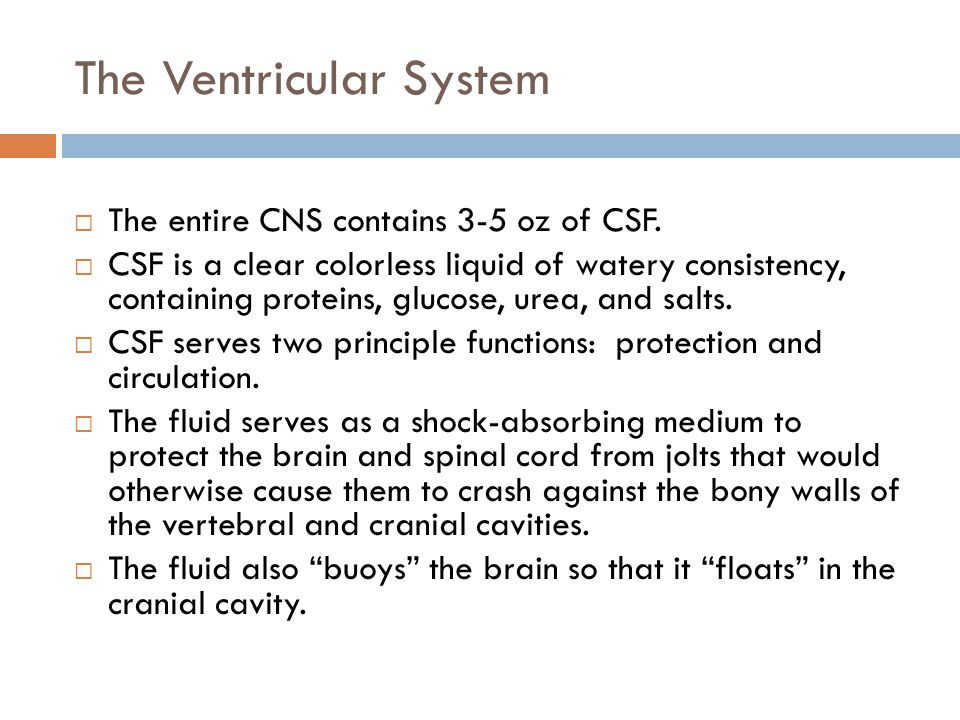 The Ventricular System  The entire CNS contains 3-5 oz of CSF.