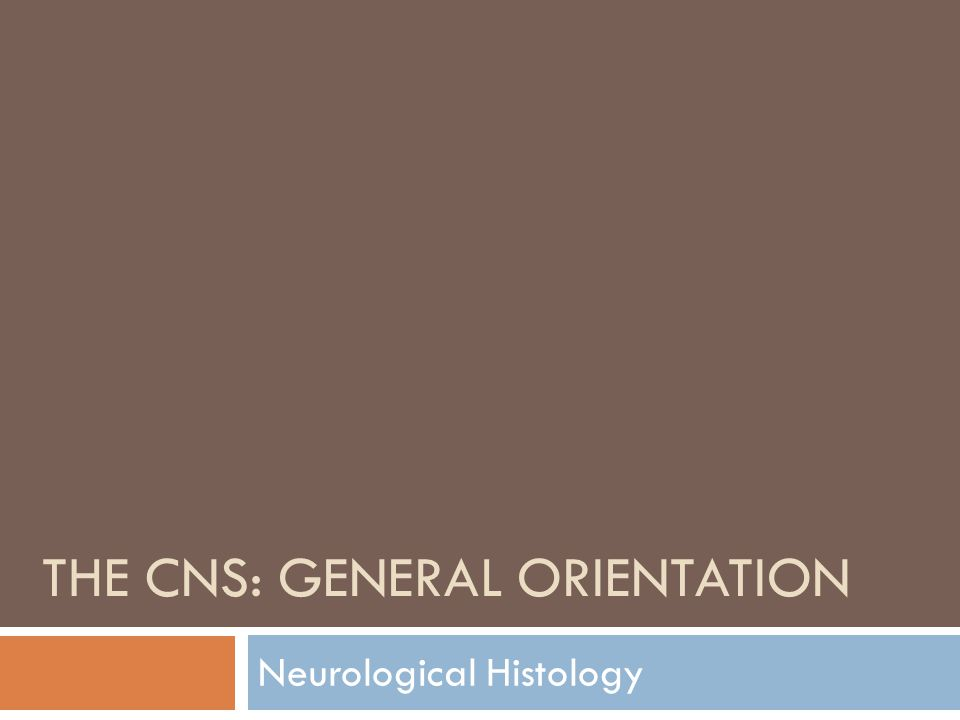 THE CNS: GENERAL ORIENTATION Neurological Histology