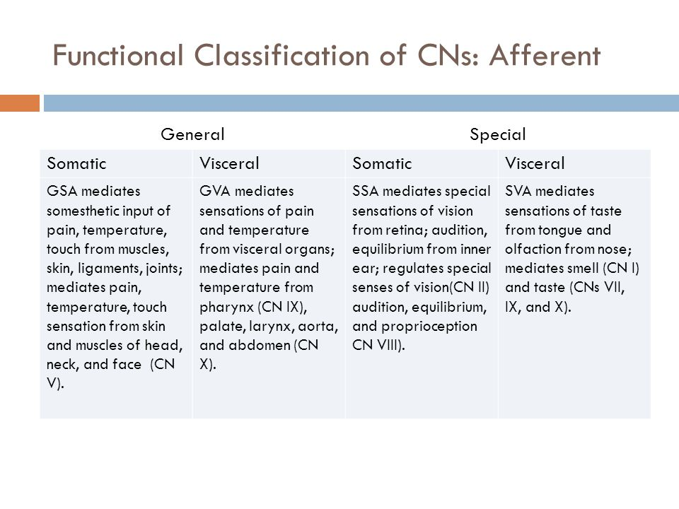 Functional Classification of CNs: Afferent GeneralSpecial SomaticVisceralSomaticVisceral GSA mediates somesthetic input of pain, temperature, touch from muscles, skin, ligaments, joints; mediates pain, temperature, touch sensation from skin and muscles of head, neck, and face (CN V).