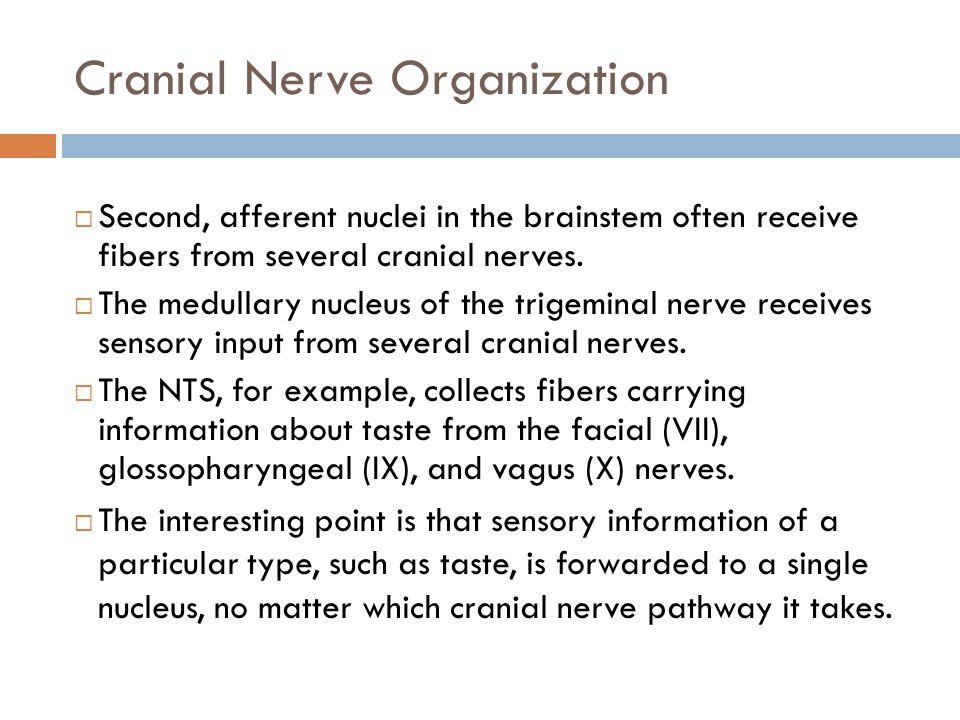 Cranial Nerve Organization  Second, afferent nuclei in the brainstem often receive fibers from several cranial nerves.