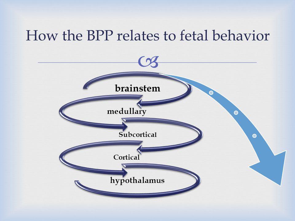  brainstem medullary Subcortica l Cortical hypothalamus How the BPP relates to fetal behavior