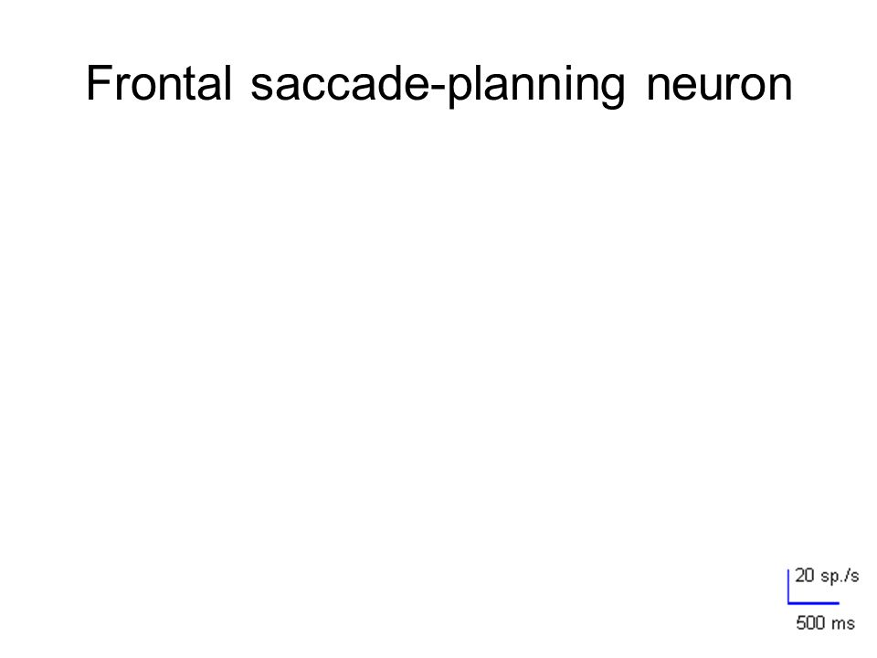 Frontal saccade-planning neuron FCDT