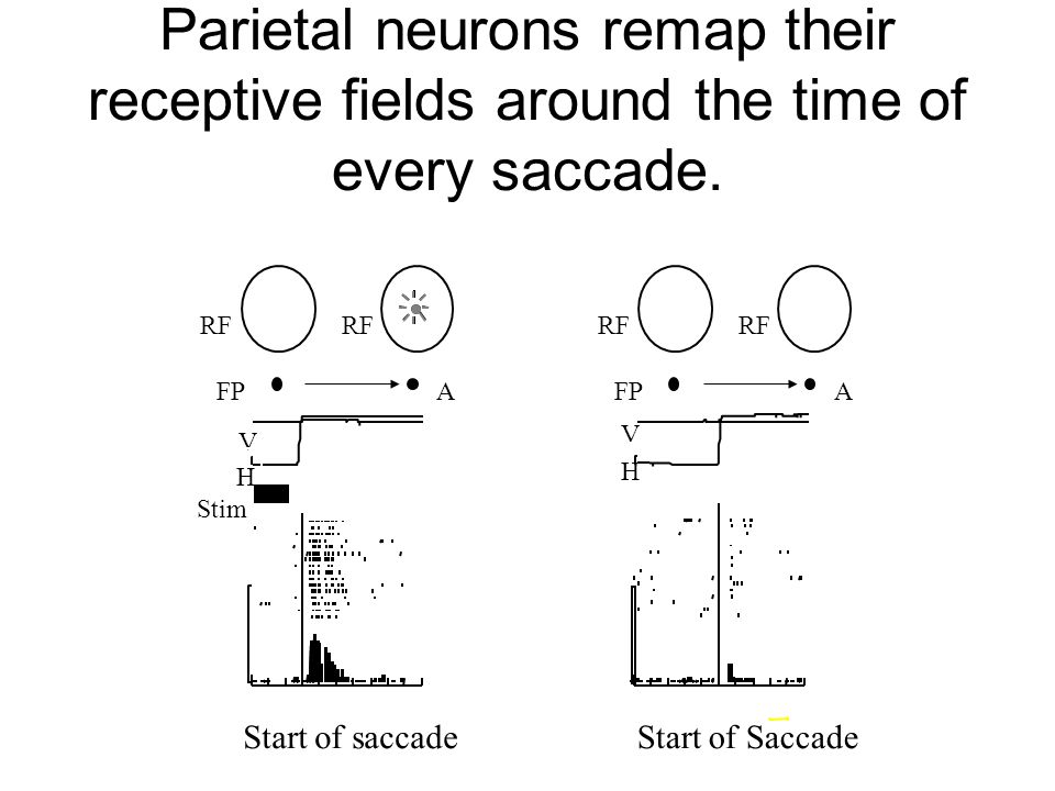 Parietal neurons remap their receptive fields around the time of every saccade.