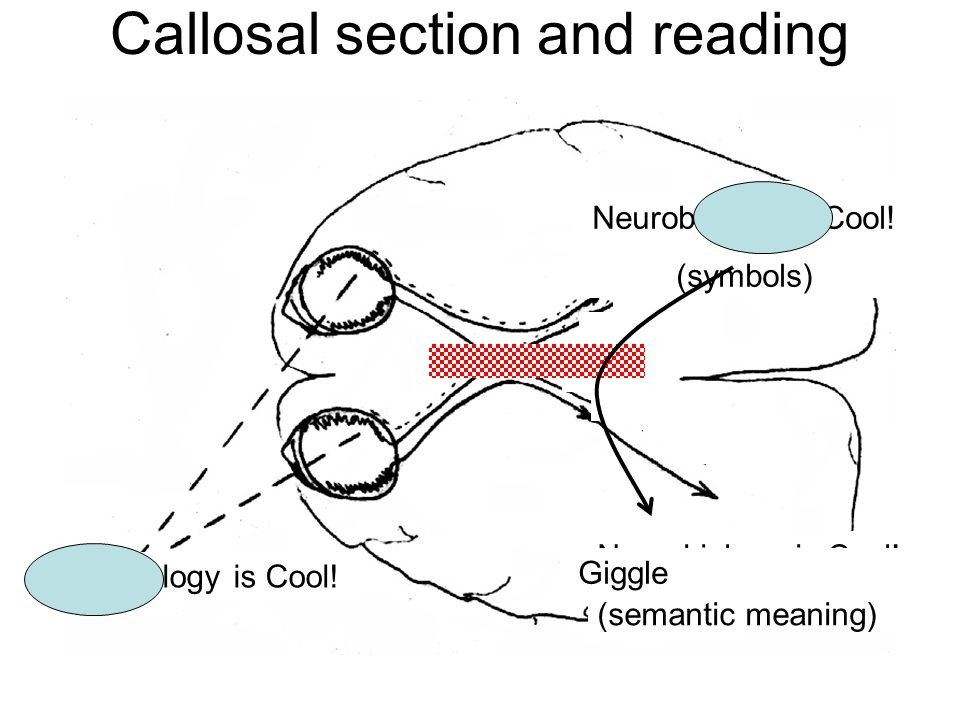 Neurobiology is Cool. (semantic meaning) Neurobiology is Cool.