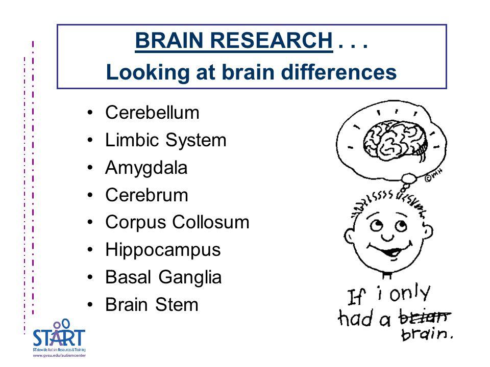 Cerebellum Limbic System Amygdala Cerebrum Corpus Collosum Hippocampus Basal Ganglia Brain Stem BRAIN RESEARCH...