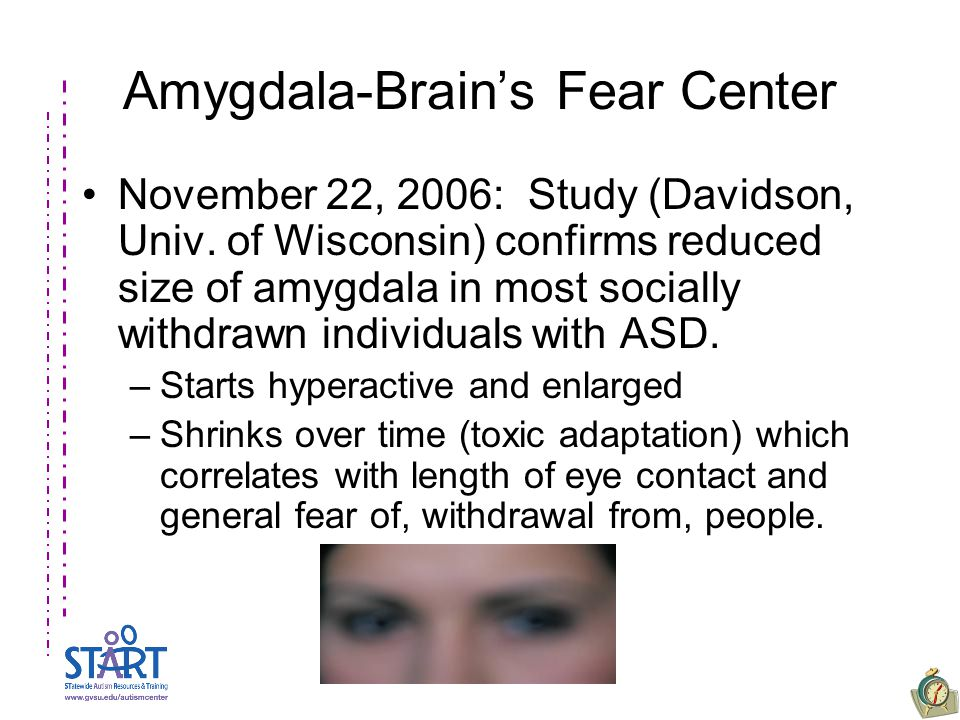 Amygdala-Brain's Fear Center November 22, 2006: Study (Davidson, Univ.