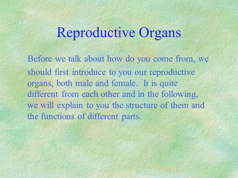Reproductive Organs Before we talk about how do you come from, we should first introduce to you our reproductive organs, both male and female. It is q