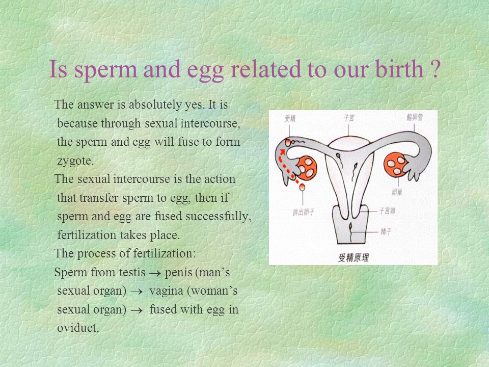 Is sperm and egg related to our birth . The answer is absolutely yes.