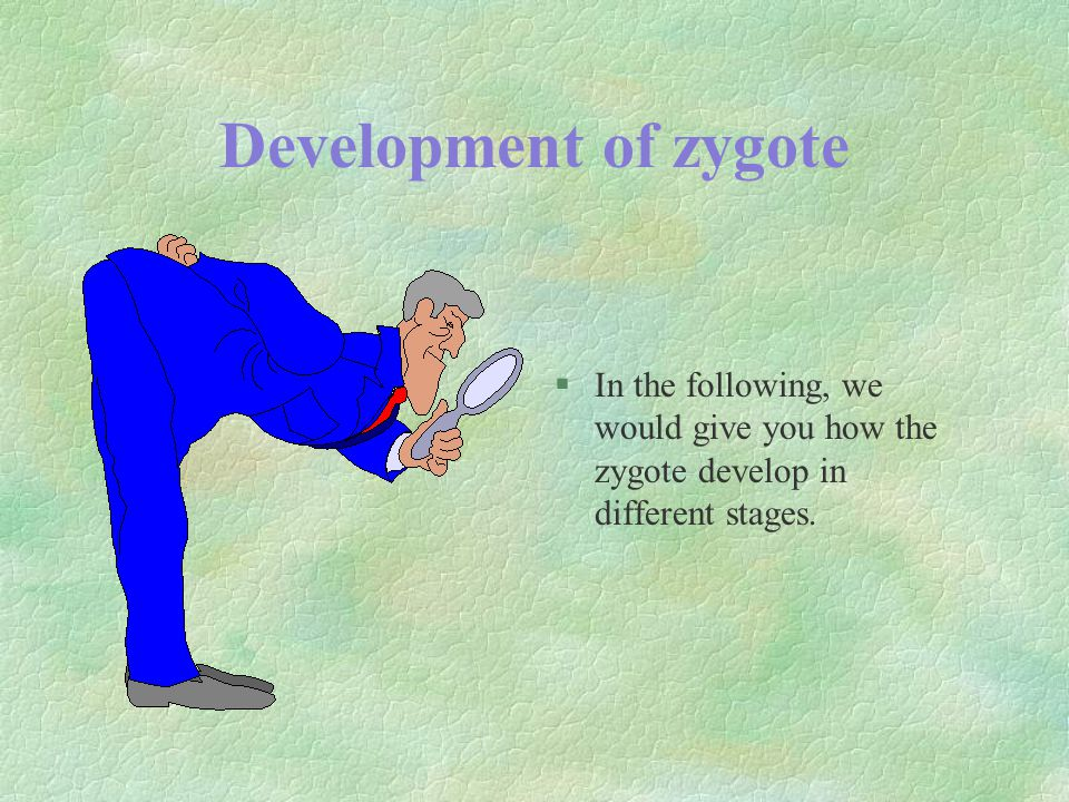 Development of zygote §In the following, we would give you how the zygote develop in different stages.