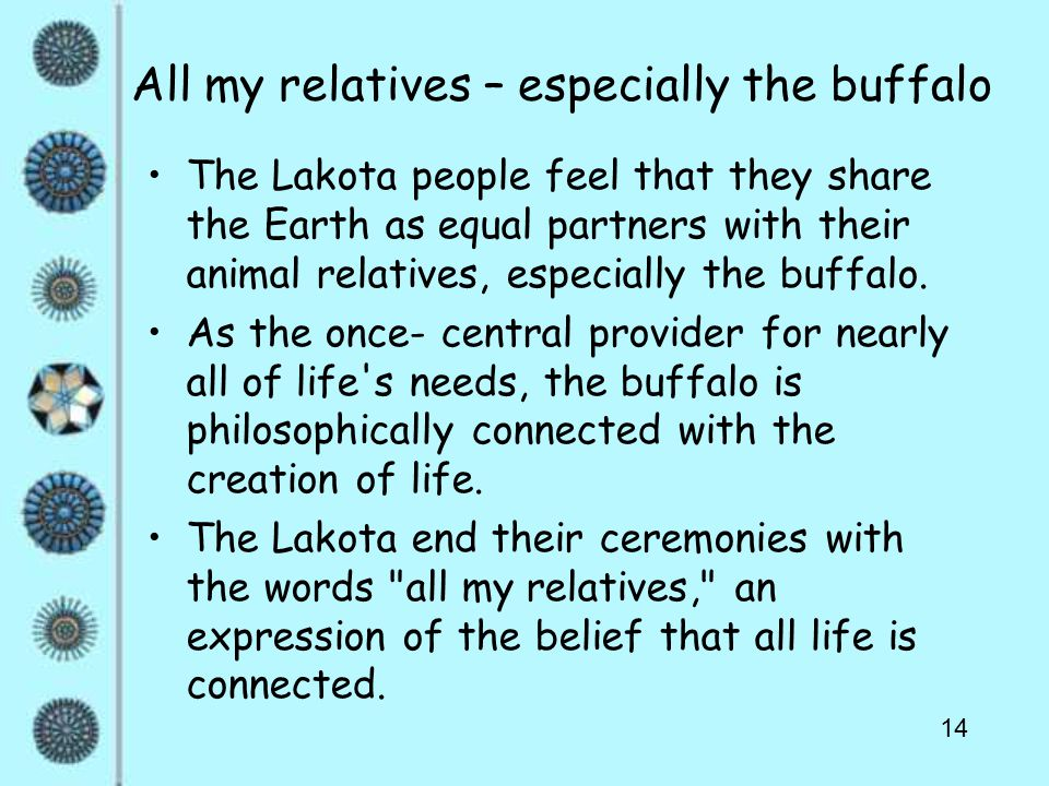 14 All my relatives – especially the buffalo The Lakota people feel that they share the Earth as equal partners with their animal relatives, especially the buffalo.