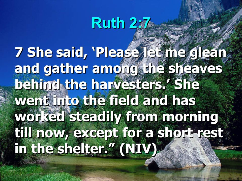 Ruth 2:7 7 She said, 'Please let me glean and gather among the sheaves behind the harvesters.' She went into the field and has worked steadily from mo