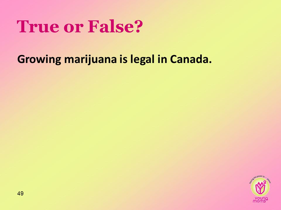 True or False? Growing marijuana is legal in Canada. 49