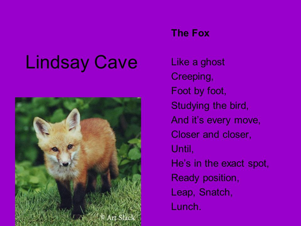 Lindsay Cave The Fox Like a ghost Creeping, Foot by foot, Studying the bird, And it's every move, Closer and closer, Until, He's in the exact spot, Re