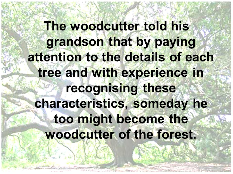 The woodcutter told his grandson that by paying attention to the details of each tree and with experience in recognising these characteristics, someda