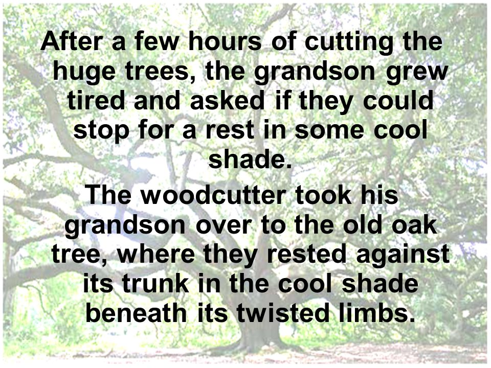 After a few hours of cutting the huge trees, the grandson grew tired and asked if they could stop for a rest in some cool shade. The woodcutter took h