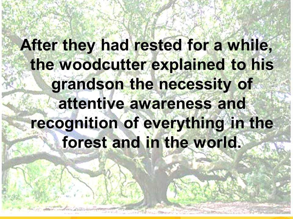 After they had rested for a while, the woodcutter explained to his grandson the necessity of attentive awareness and recognition of everything in the