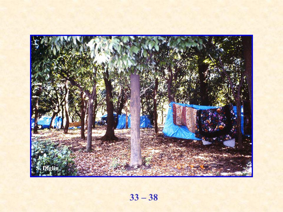 33 – 38 S. Diglio