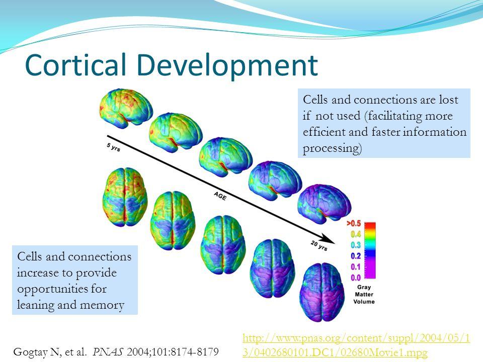 Cortical Development Gogtay N, et al.