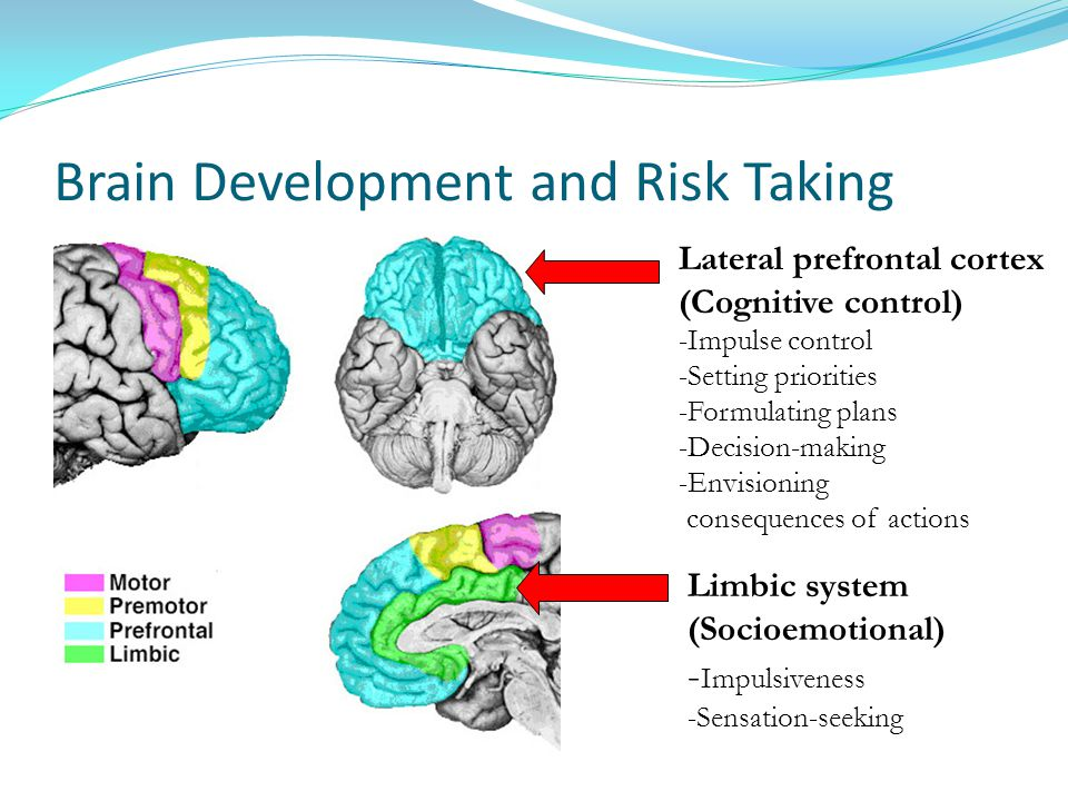 Brain Development and Risk Taking Lateral prefrontal cortex (Cognitive control) -Impulse control -Setting priorities -Formulating plans -Decision-making -Envisioning consequences of actions Limbic system (Socioemotional) - Impulsiveness -Sensation-seeking