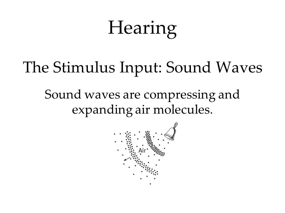 Hearing The Stimulus Input: Sound Waves Sound waves are compressing and expanding air molecules.