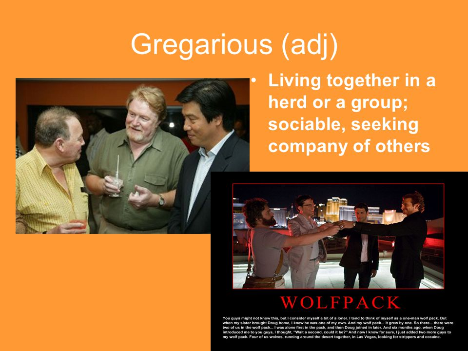 Gregarious (adj) Living together in a herd or a group; sociable, seeking company of others