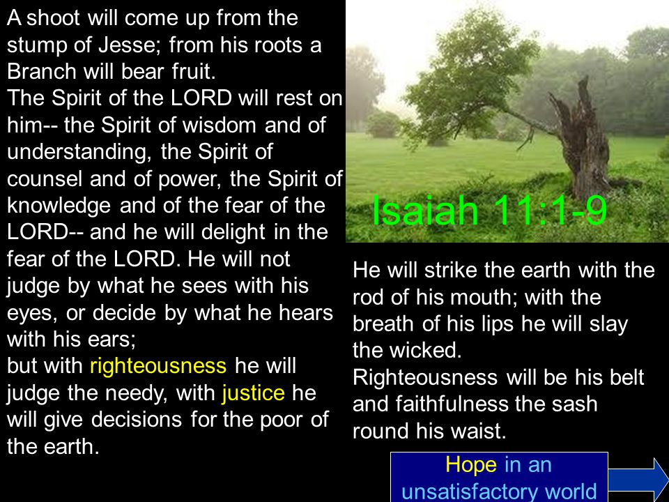 Isaiah 11:1-9 A shoot will come up from the stump of Jesse; from his roots a Branch will bear fruit.
