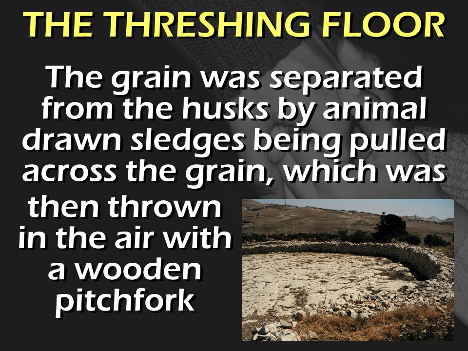 THE THRESHING FLOOR The grain was separated from the husks by animal drawn sledges being pulled across the grain, which was then thrown in the air with a wooden pitchfork