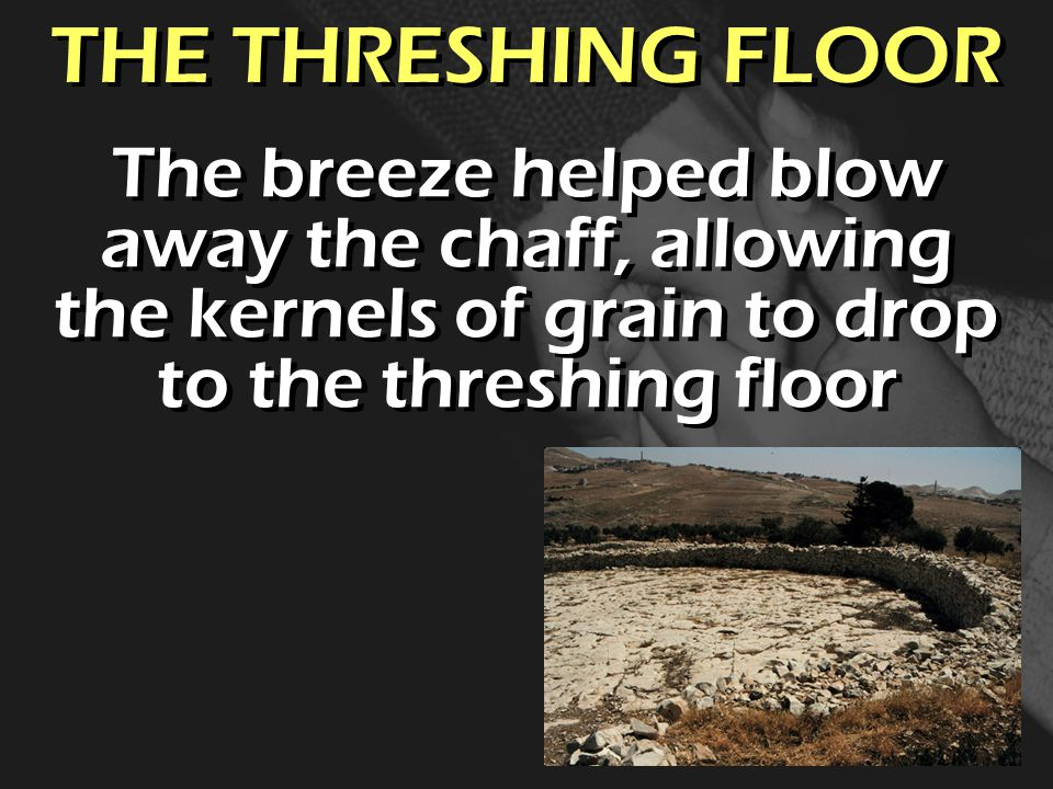 THE THRESHING FLOOR The breeze helped blow away the chaff, allowing the kernels of grain to drop to the threshing floor