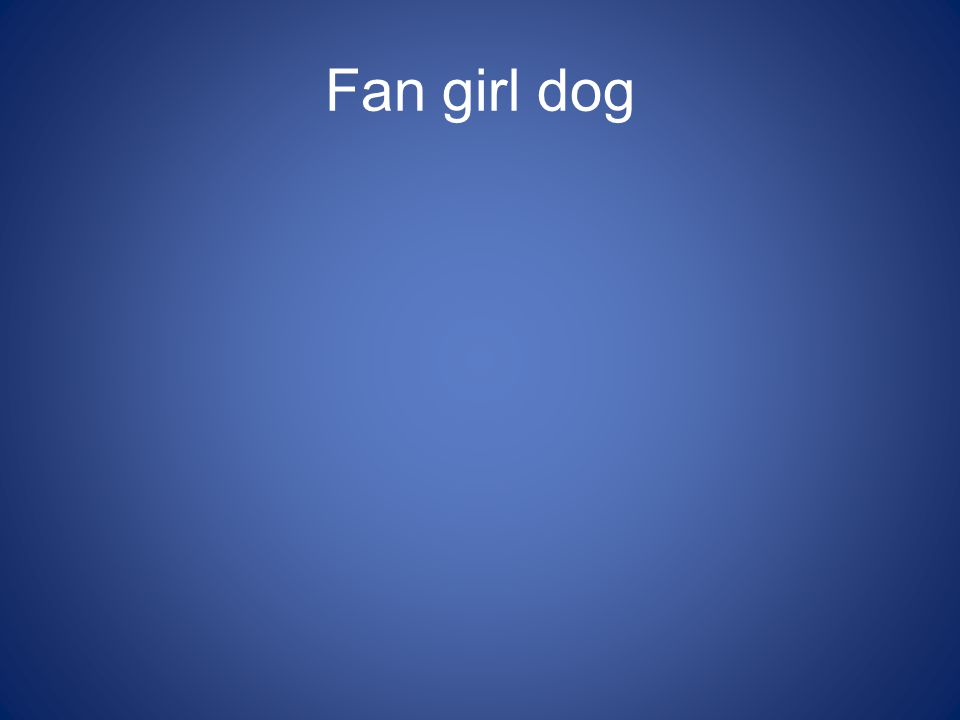 Fan girl dog