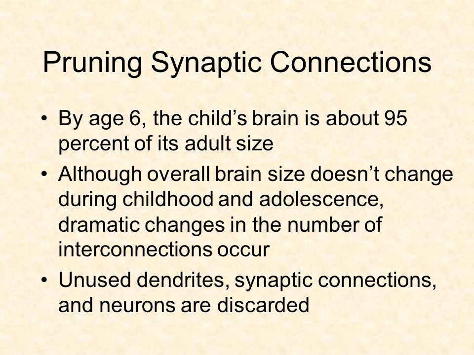 Pruning Synaptic Connections By age 6, the child's brain is about 95 percent of its adult size Although overall brain size doesn't change during childhood and adolescence, dramatic changes in the number of interconnections occur Unused dendrites, synaptic connections, and neurons are discarded