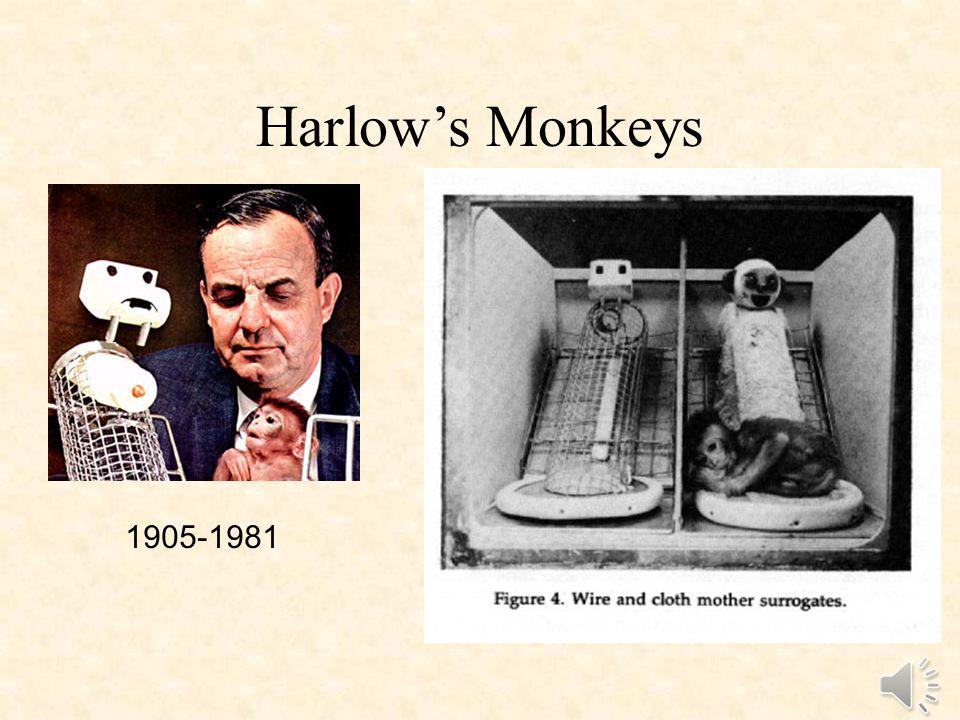 Harlow's Monkeys 1905-1981