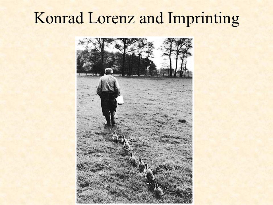 Konrad Lorenz and Imprinting