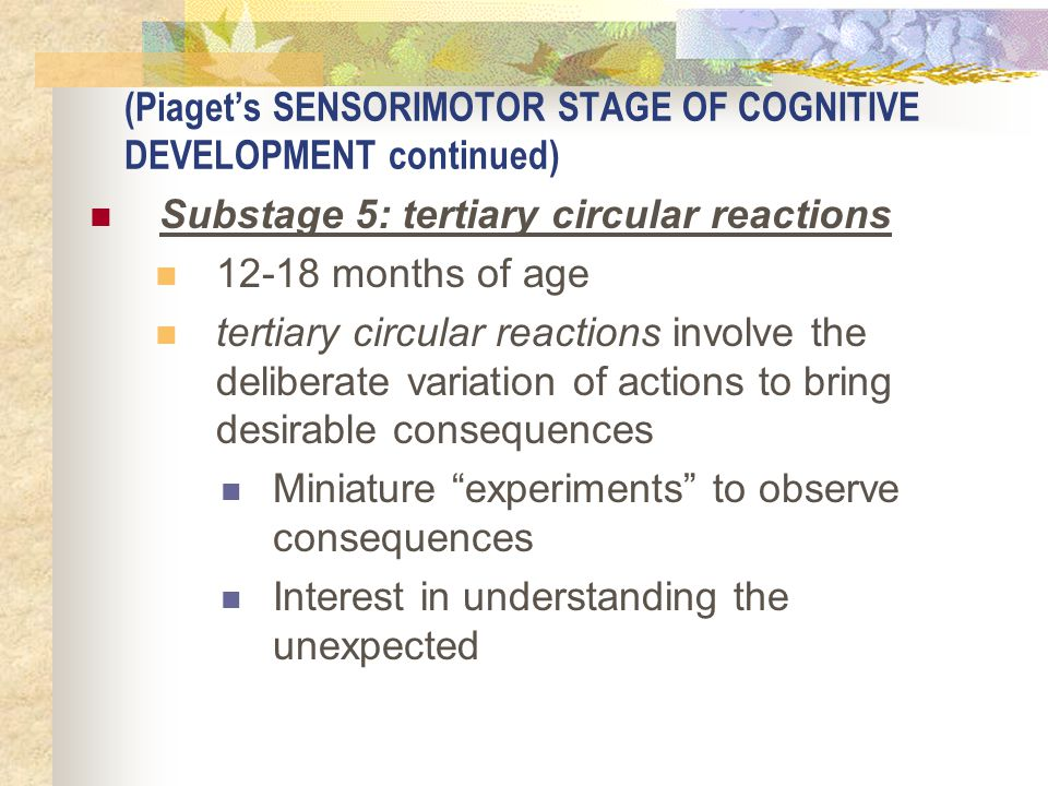 (Piaget's SENSORIMOTOR STAGE OF COGNITIVE DEVELOPMENT continued) Substage 5: tertiary circular reactions 12-18 months of age tertiary circular reactio