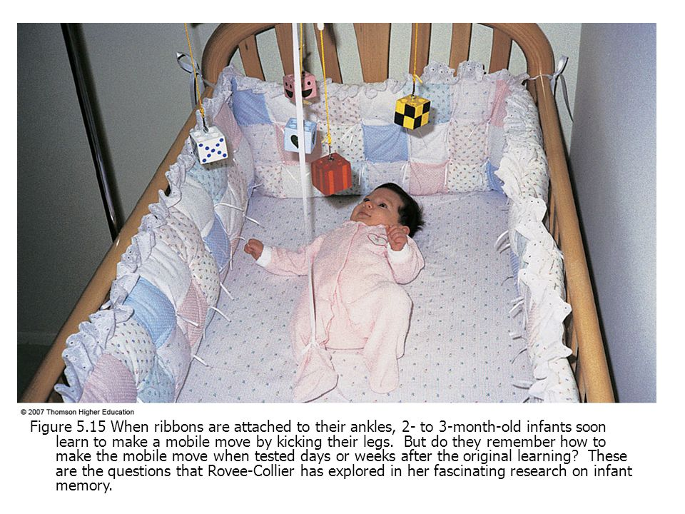 Figure 5.15 When ribbons are attached to their ankles, 2- to 3-month-old infants soon learn to make a mobile move by kicking their legs. But do they r