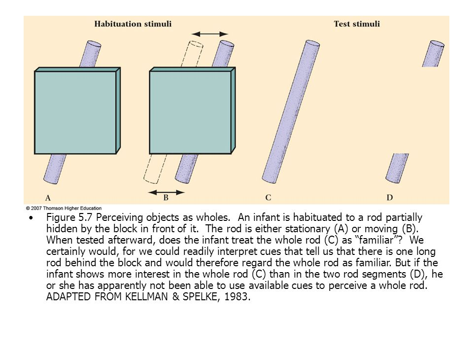 Figure 5.7 Perceiving objects as wholes. An infant is habituated to a rod partially hidden by the block in front of it. The rod is either stationary (