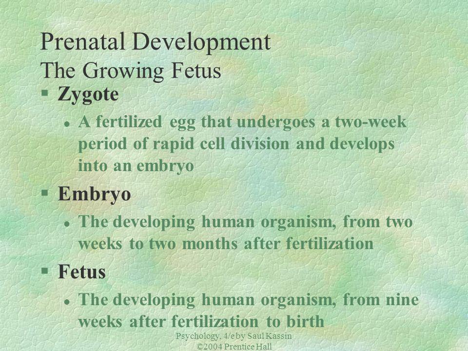 Psychology, 4/e by Saul Kassin ©2004 Prentice Hall Prenatal Development The Growing Fetus Fertilization 30 Hours 6 weeks4 months