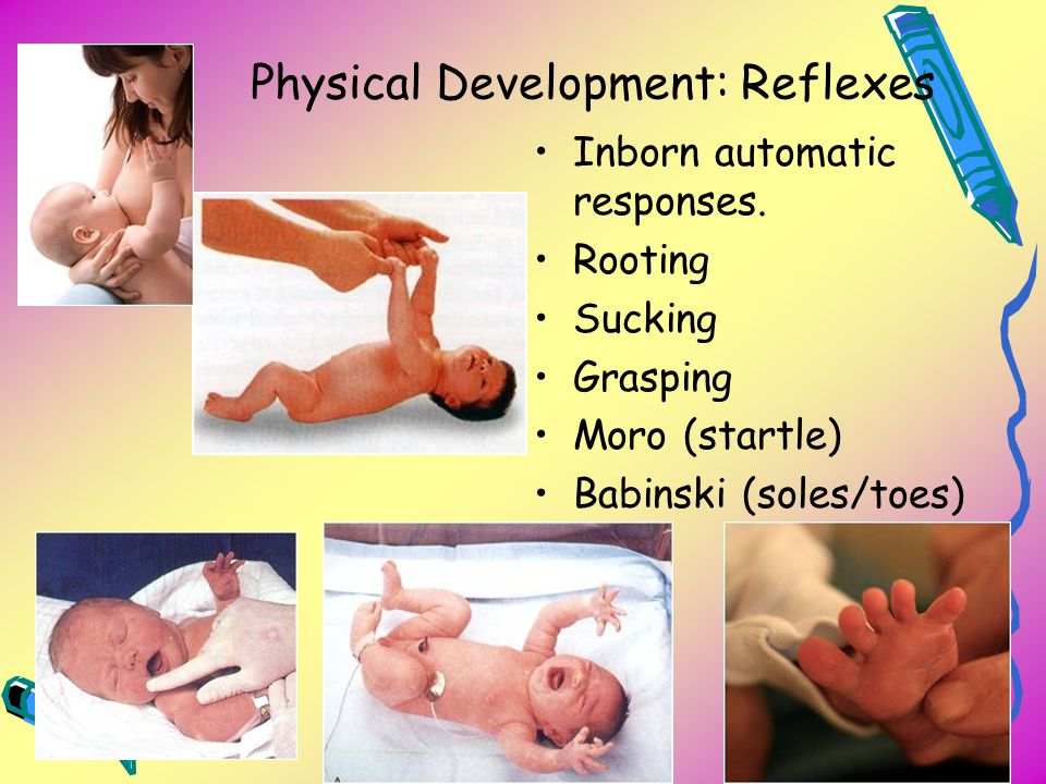 Physical Development: Reflexes Inborn automatic responses. Rooting Sucking Grasping Moro (startle) Babinski (soles/toes)