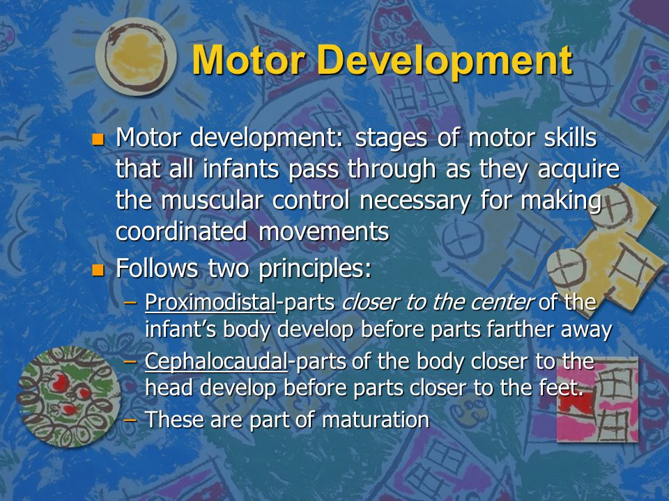 Motor Development n Motor development: stages of motor skills that all infants pass through as they acquire the muscular control necessary for making