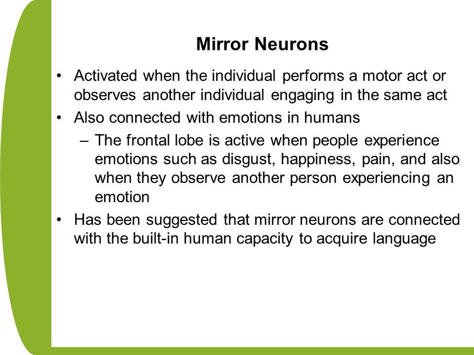 Mirror Neurons Activated when the individual performs a motor act or observes another individual engaging in the same act Also connected with emotions