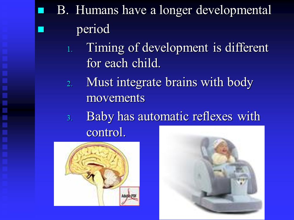B. Humans have a longer developmental B. Humans have a longer developmental period period 1.