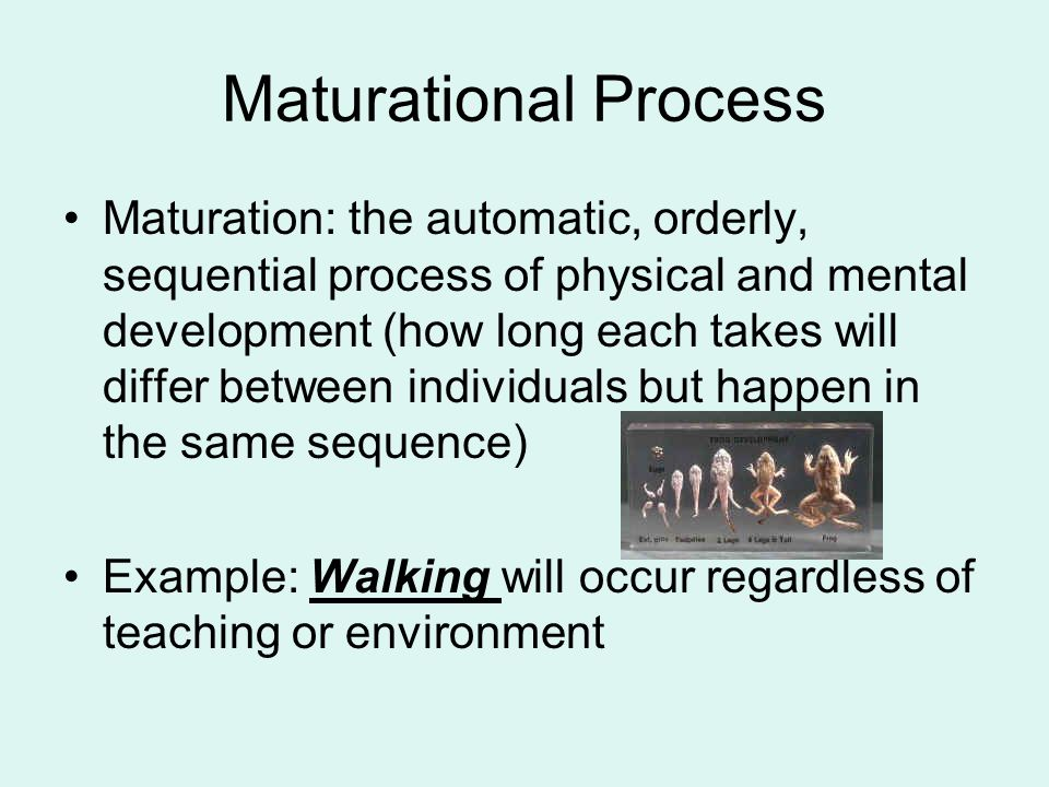Maturational Process Maturation: the automatic, orderly, sequential process of physical and mental development (how long each takes will differ betwee