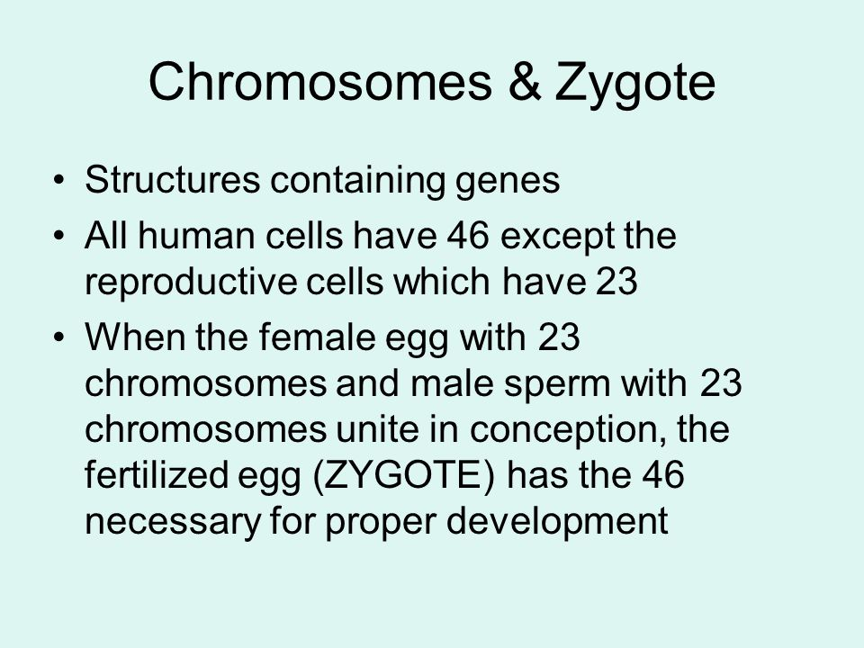 Chromosomes & Zygote Structures containing genes All human cells have 46 except the reproductive cells which have 23 When the female egg with 23 chrom