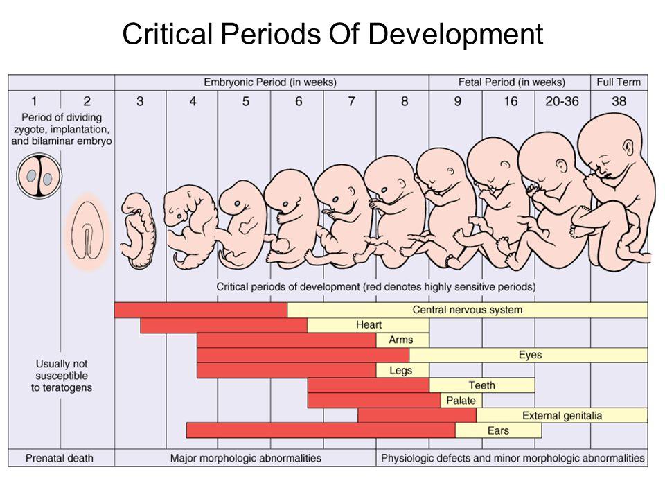 Critical Periods Of Development