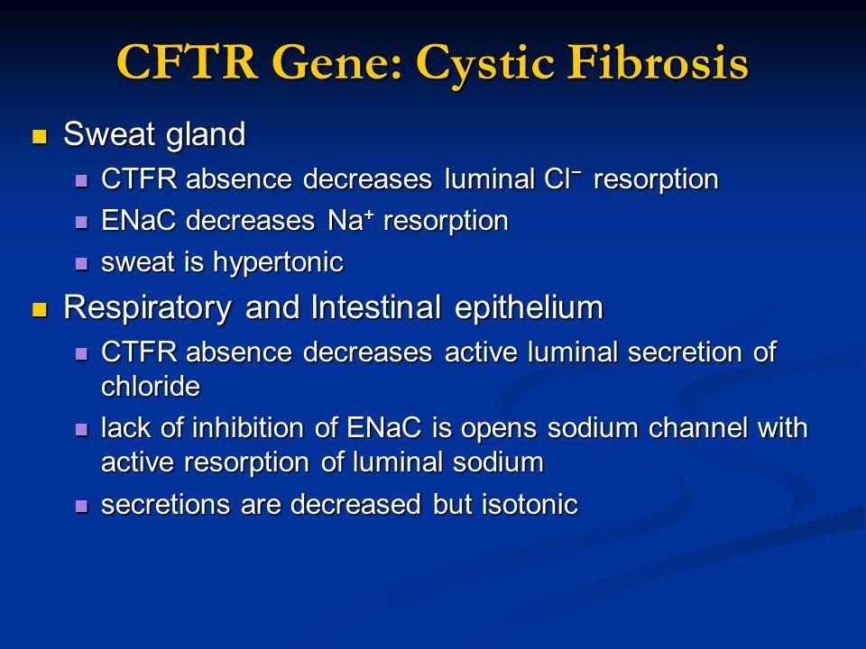 CFTR Gene: Cystic Fibrosis Sweat gland Sweat gland CTFR absence decreases luminal Cl − resorption CTFR absence decreases luminal Cl − resorption ENaC