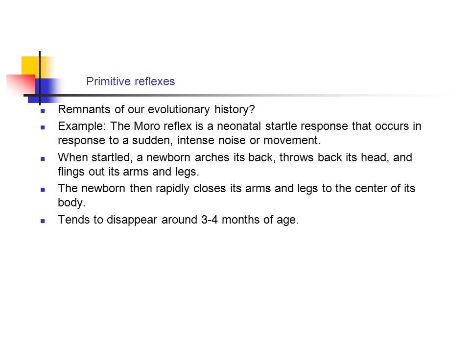 Primitive reflexes Remnants of our evolutionary history? Example: The Moro reflex is a neonatal startle response that occurs in response to a sudden,